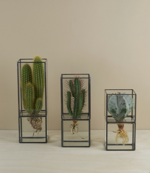 Terra hydroponic cases