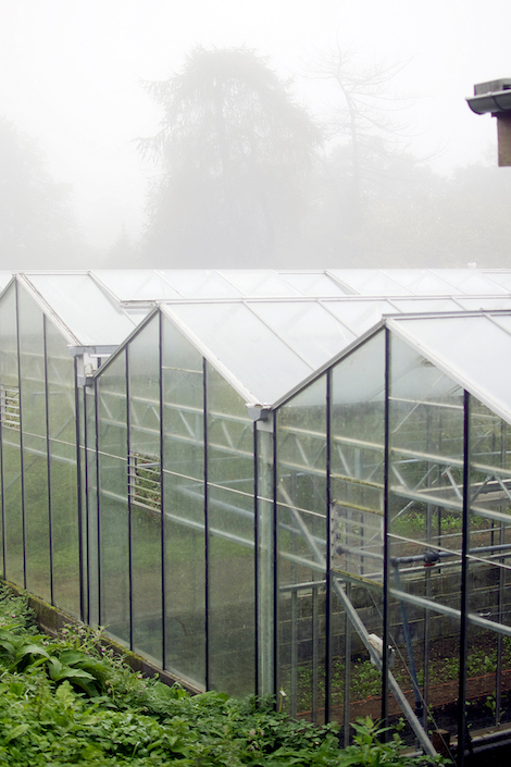 The greenhouses where herbs and vegetables are grown through the year.